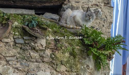 italy campania fiume valle monti sele cilento alburni controne