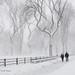 Dancing Trees in a Blizzard by CVerwaal