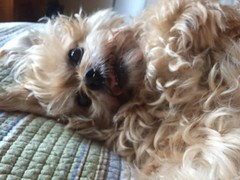 Happy 15th to my favorite silly snuggle bug. Life would be dull, dreary, and a bit more sanitary without you. #dogsofinstagram
