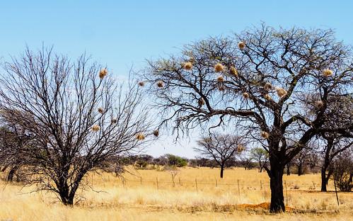 omahekeregion namibie