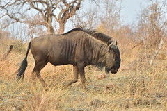 Madikwe Game Reserve, North West, South Africa