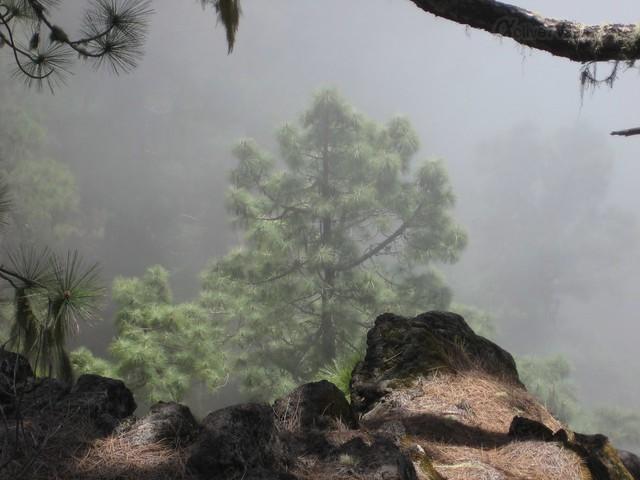 view 0012 Tenerife, Canary Islands, Spain