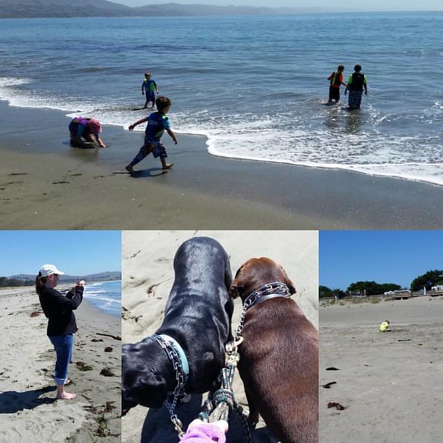 Friends and dogs on the beach. #12yo #9yo #BodegaBay #friends #DaneLabMix #GermanShortHairLabMix