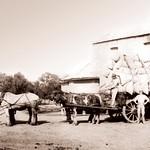 Laucke_Mills_Greenock Mill_early_1900s