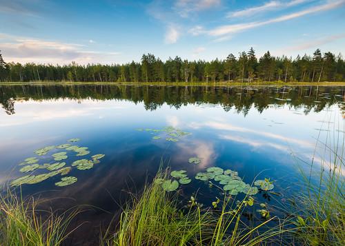 suomi finland daylight swamp pohjanmaa vöyri träsk österbotten ostrobothnia vörå kackurlampen