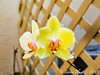 ~ Orchids With A Fuji X T1 3 ~ by iTail ~ 3.3 MV ~ Thanks !!