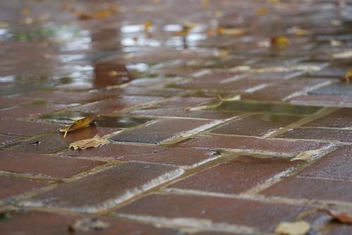 Rainy Day Bricks