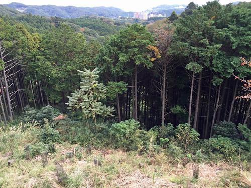 Scene from Yakushi Forest Road(Atsugi, Japan)
