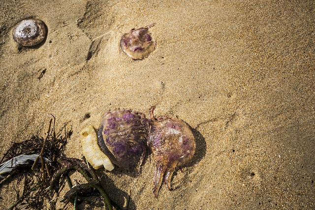 Playa de Ris, Noja
