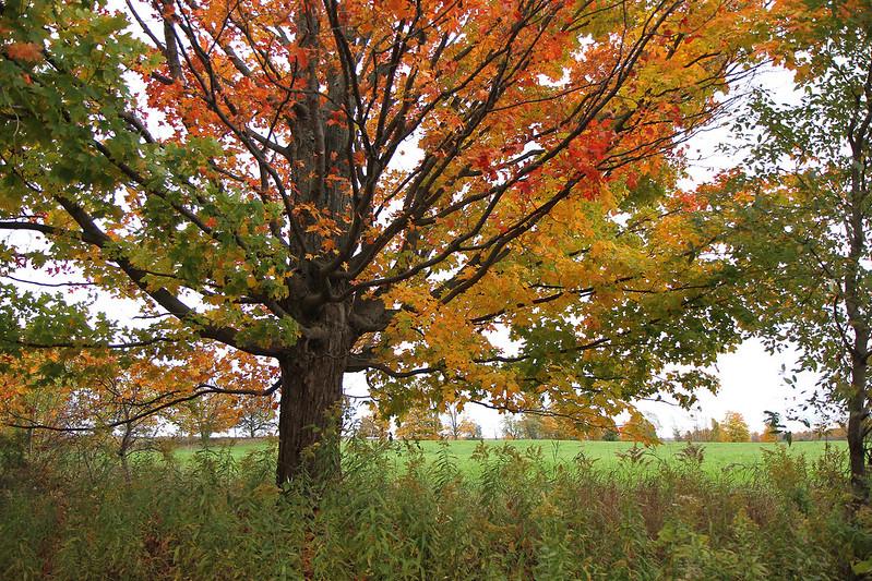 Autumn drive53