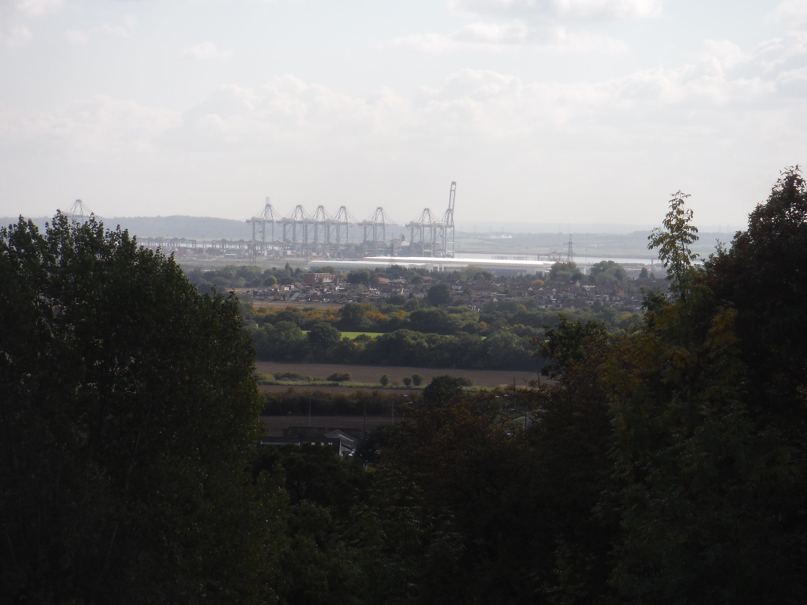 London Gateway, deep water container port through trees SWC Walk 114 Laindon Circular