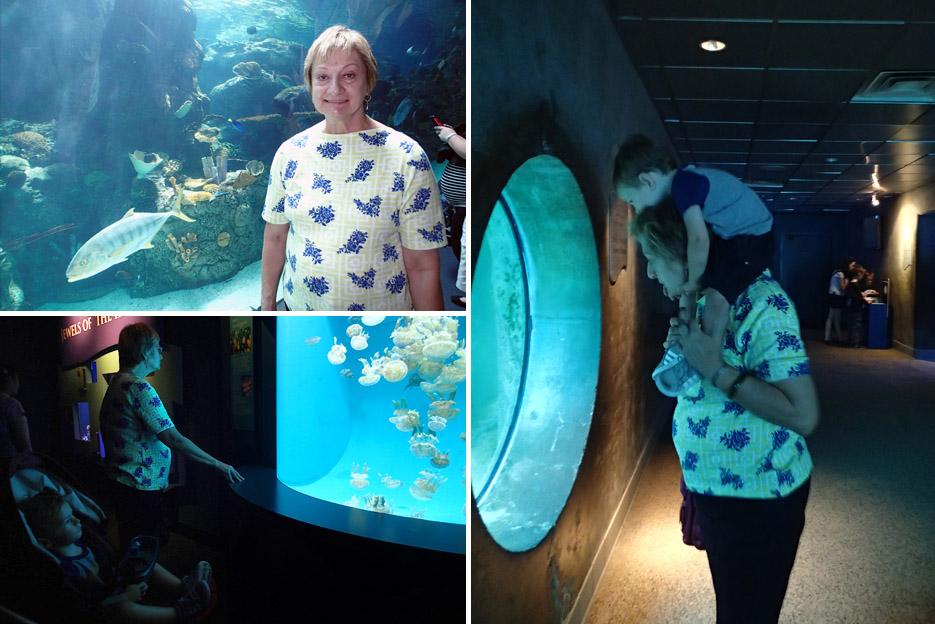 082115_aquarium09