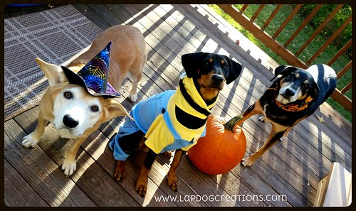 Lapdog Creations Halloween Dogs