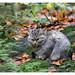 Wild Cat by Kieran Commins