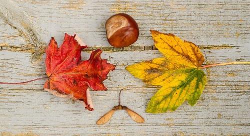 10月ベスト5 by pixabay