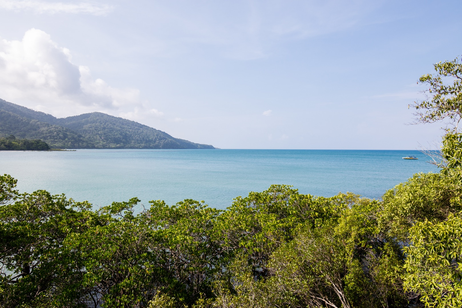 Australien: Daintree Rainforest