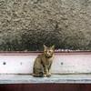 Morning Street cat 2