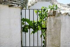 Alberobello, puglia.