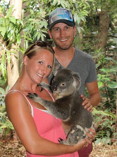 und noch mehr Koalas