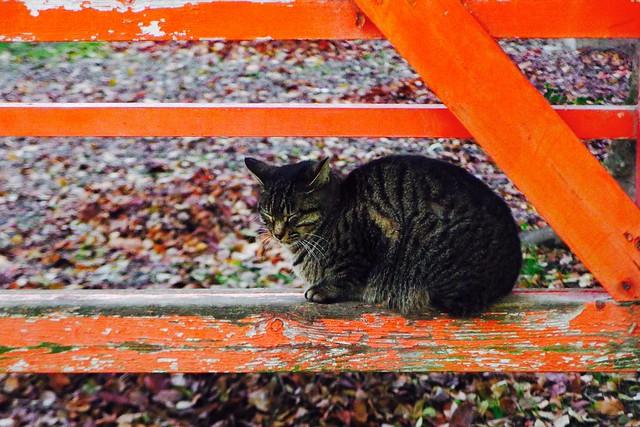 Today's Cat@2016-12-08
