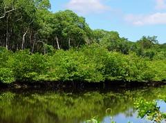 Backaday River Scenery