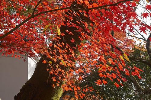 【写真】紅葉 : 霊鑑寺