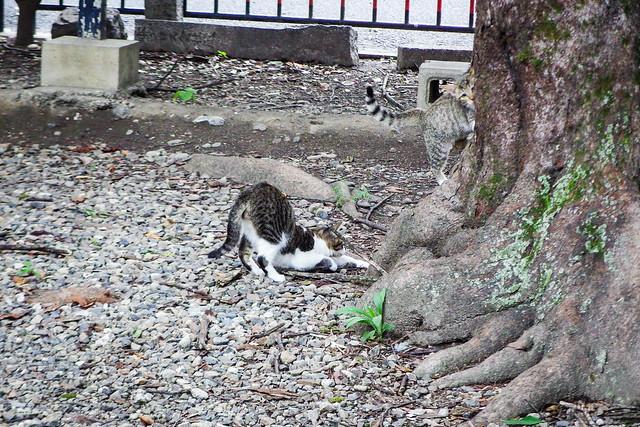 Today's Cat@2015-09-11