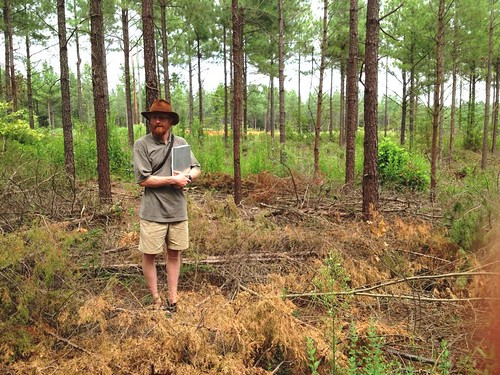 Fields-Johnson standing in his hand-thinned loblolly pine silvopasture