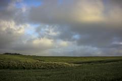 field am
