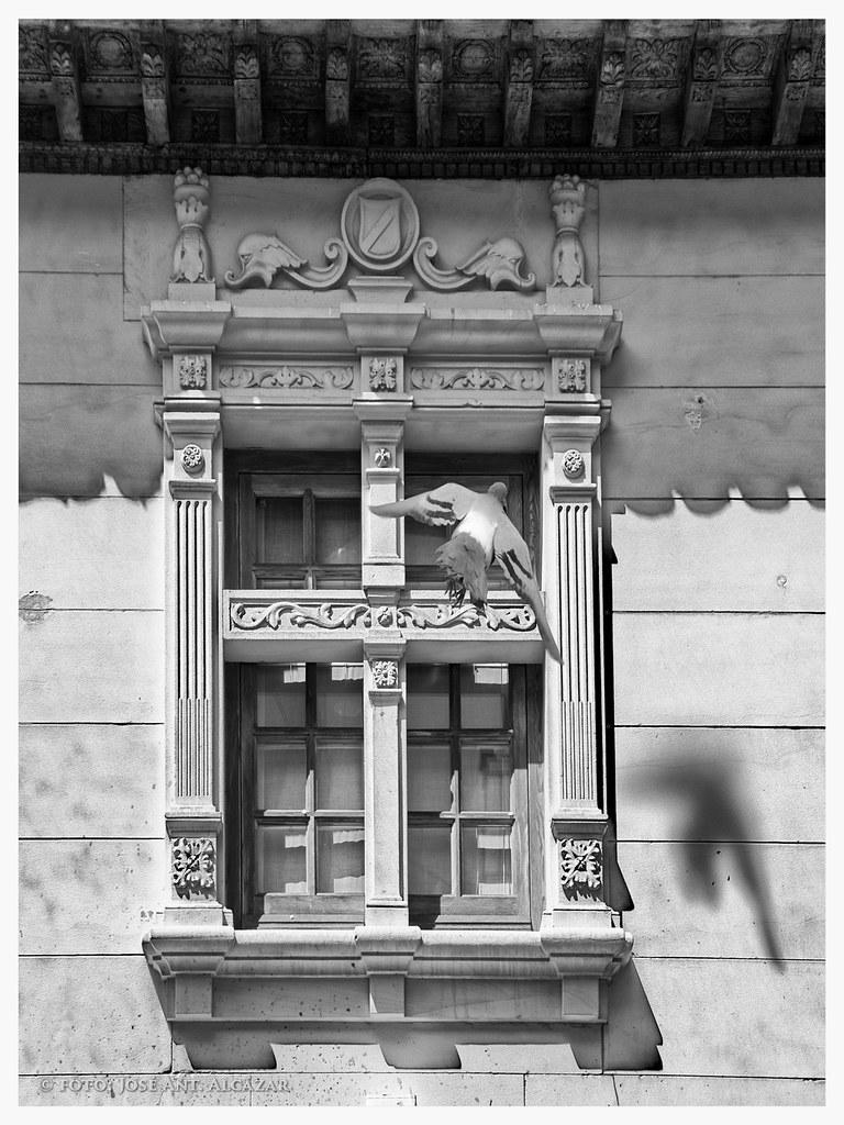 """Título:""""Ventana con paloma en la calle La Paloma"""""""
