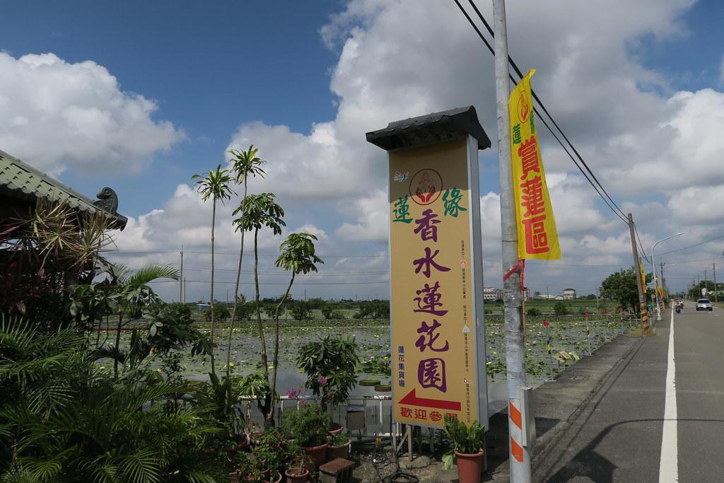 台南市白河區蓮緣香水蓮花園 (7)