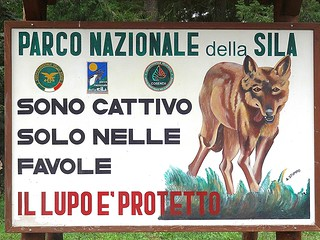 Изображение на Parco Nazionale della Sila. italy parco mountains forest natura montagna calabria sila bosco boschi