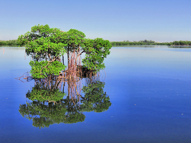 Mangrove reflection HDR 20151016