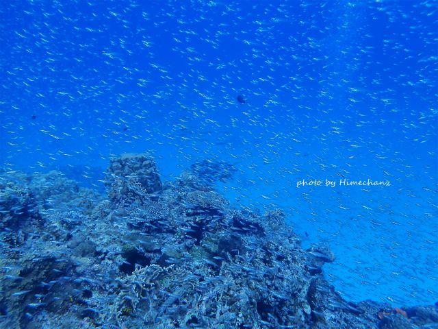 竹富ブルーの中、小魚いっぱい♪