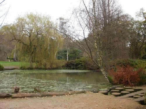 Still Pond Richmond Park