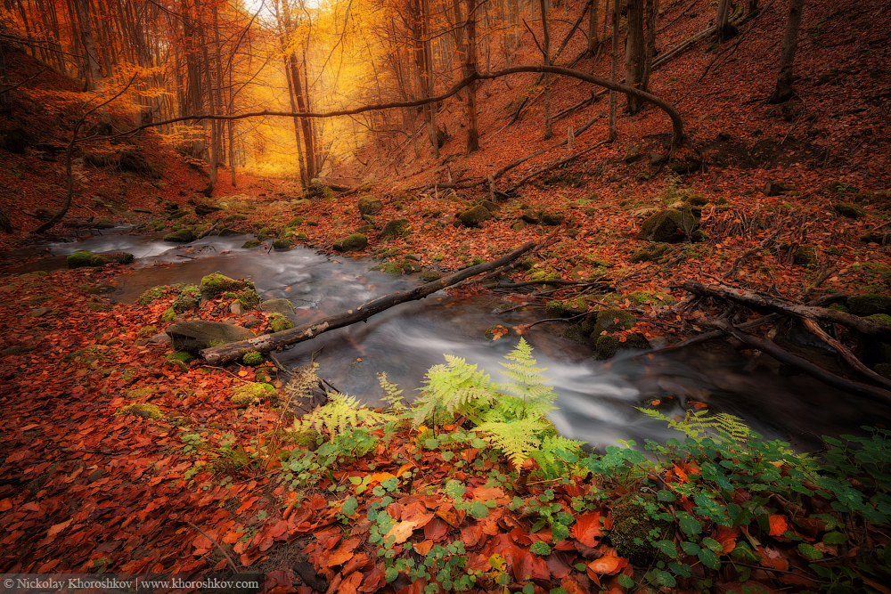 Autumn colors forest and small creek