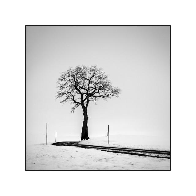 Tree beside a road