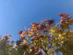 Excellent fall foliage