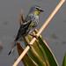 Yellow-rumped Warbler por cjlloyd2078