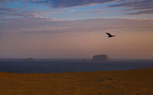 sanddunes dunes sand landscape desert lacatedral huacachina sunset shoreline peru paracas playayumaque playasupay ica pe