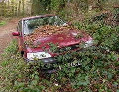 Rora Wood