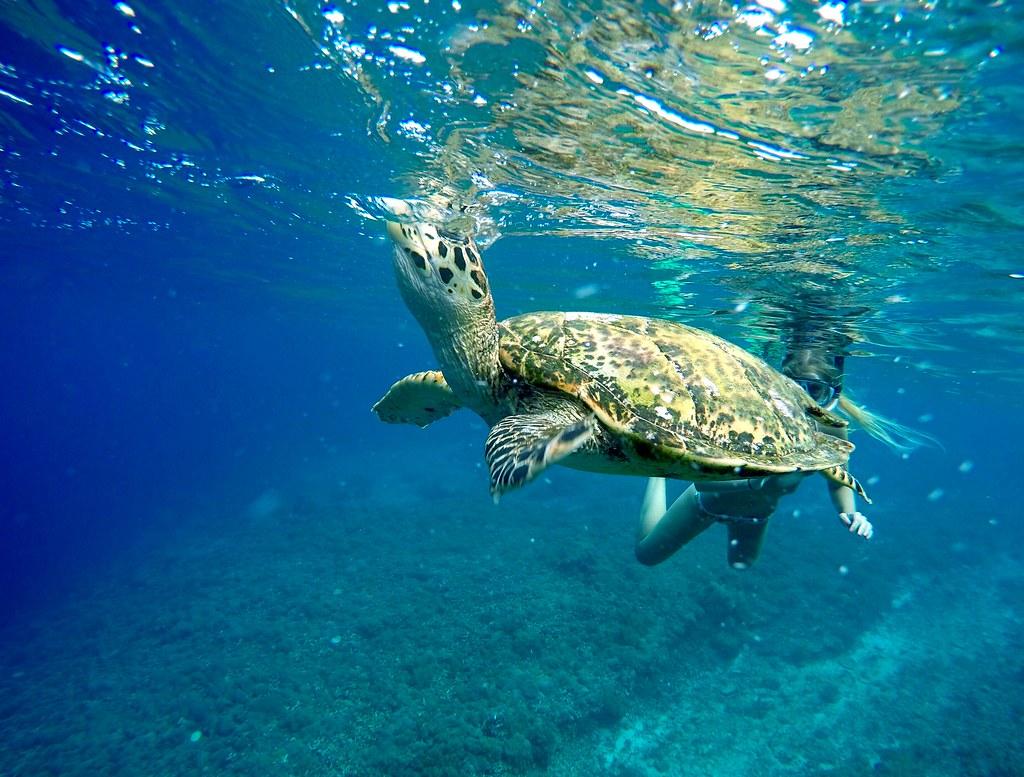 Sea turtle breath underwater