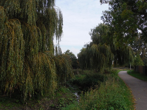 Willows, The Lea