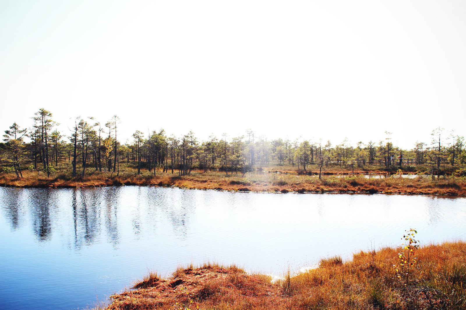kemeri swamp