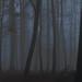 daybreak in the woods.. by petegatehouse