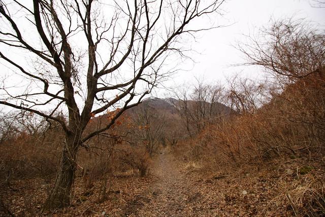 20150307-三瓶山-0197.jpg