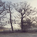 Wintery morning by tad2106 - Trudie Davidson Photography