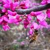 Signs of spring #texas #texasroads #bee