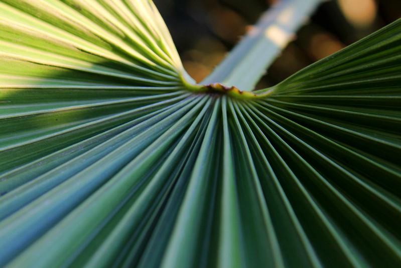 Palm Tree Macro