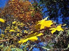 Herbst im Zauberwald